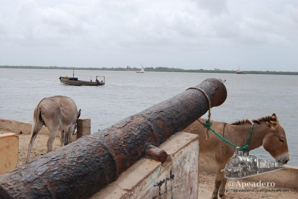 Lamu: La isla de los burros