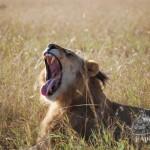¿Cuanto cuesta ir de safari en Sudáfrica por libre?