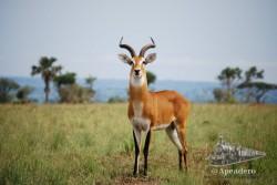 La estética del impala es espectacular.