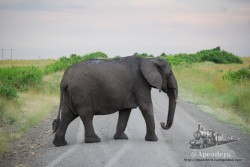 Si a un elefante le da por cruzar la carretera, para y déjale espacio.