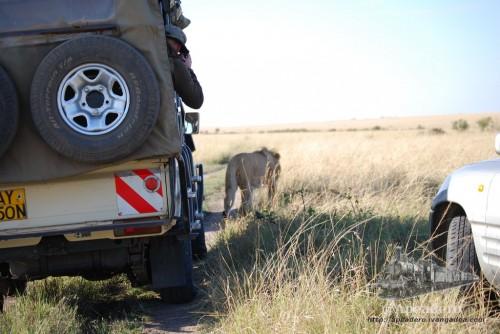 Algunos turistas (quizás mal asesorados por guías locales) no entienden que deben dejar su espacio a los animales.