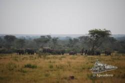 Circulábamos tranquilamente por un camino cuando a lo lejos vimos algo moverse: ¡Parecen muchos elefantes!