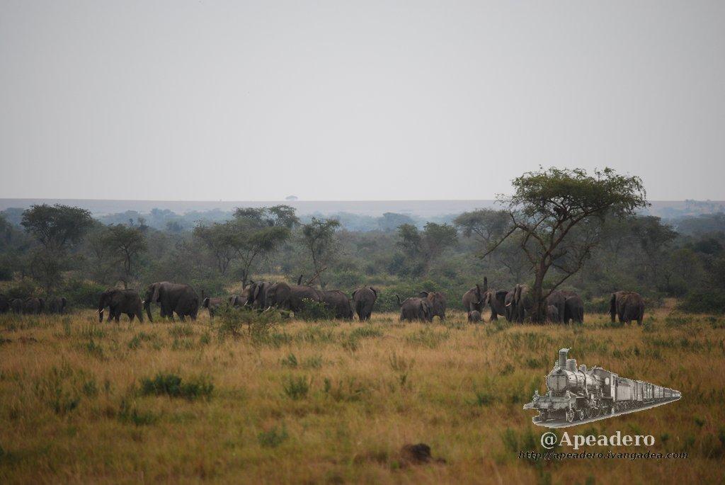 Yo ignoré 60 elefantes