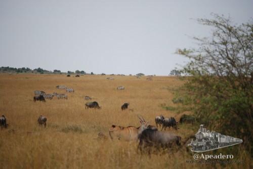 Los espacios son muy grandes por lo que los roces solo se producen por la comida o si un despistado se mete en el territorio equivocado.