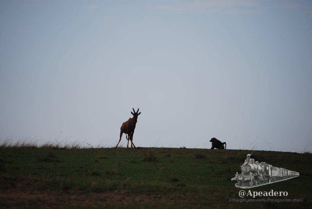 La convivencia de los animales