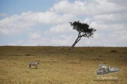 62 - Los paisajes - Kenia  (op2)