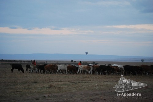 Los únicos masais auténticos que encontraréis los veréis solo de pasada.