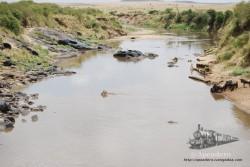 En este plano hay 4 animales, los principales bichos que se pueden encontrar en el río Mara. Eso sí, el cocodrilo está debajo del agua, junto a un tronco cerca de los ñús.