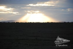 Masai Mara tiene algo mágico y la Gran Migración es parte de ese algo.