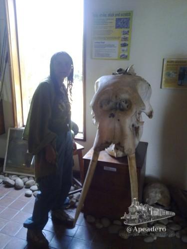 Nuria frente a una mandíbula de elefante