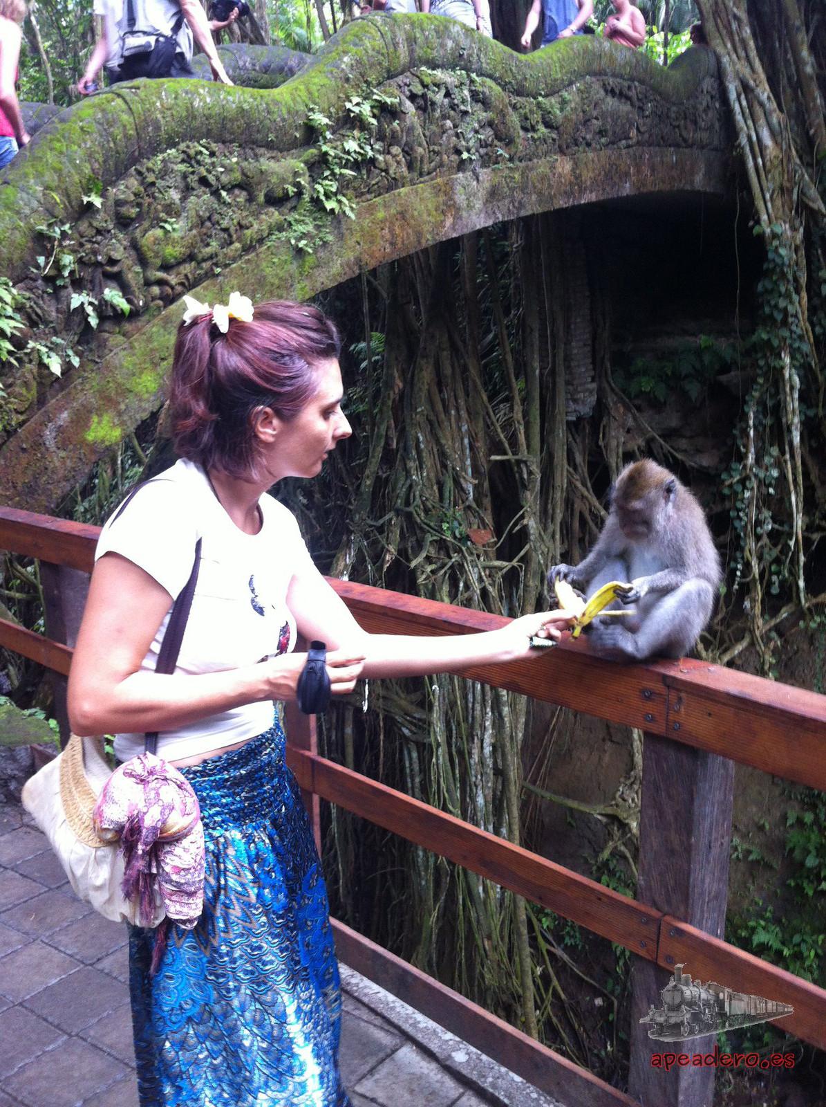 Los encantos de Ubud tienen más que ver con los valores tradicionales de Bali, como el bosque sagrado de los monos.