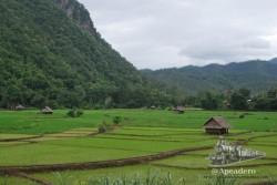 Los campos de arroz son estampas impresionantes.
