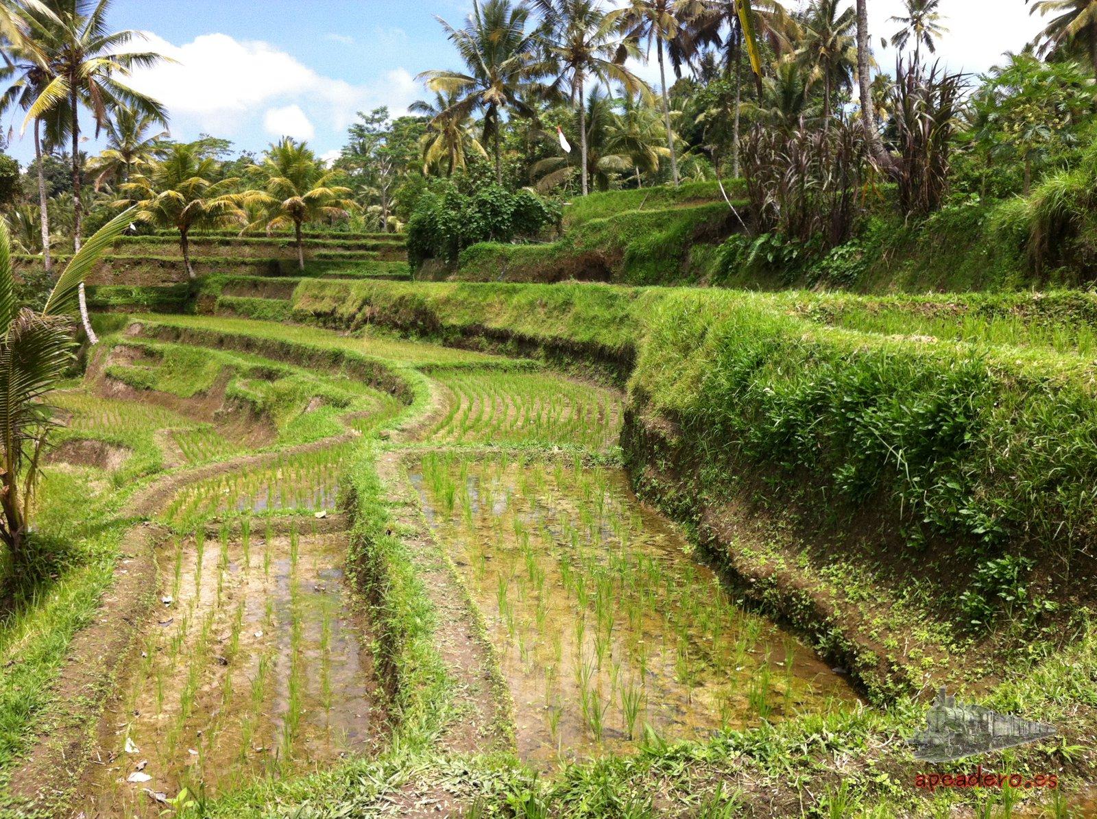 Los paisajes de Bali son muy diferentes a los de Lombok y Gili.