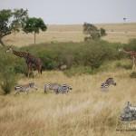 Una de tantas estampas típicas de Masai Mara