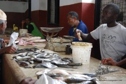 El pescado es de lo mejor que se puede encontrar en el mercado de Lamu
