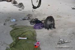 Este es el mono ladrón que tuve que espantar para que no nos robara toda la bolsa.
