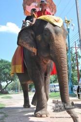 Los elefantes pasean tranquilamente por el medio de la ciudad.