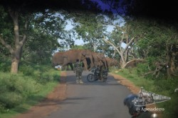 Ver elefantes no es complicado, pero curiosamente nosotros vimos más en la carretera que en el propio parque.