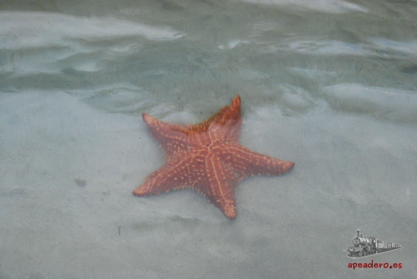 Cómo visitar la playa de las estrellas (Bocas del Toro, Panamá)
