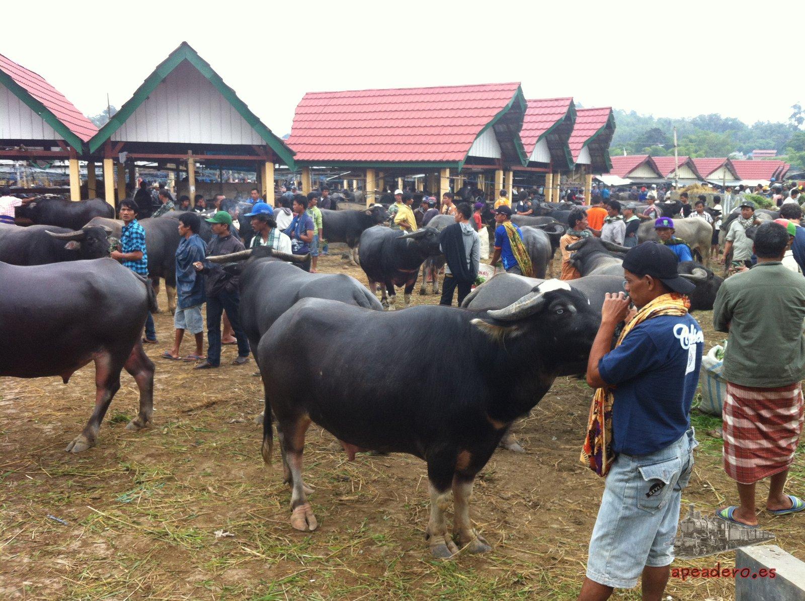 Visitar la feria de ganado semanal es otra de las experiencias que no hay que perderse. Aquí se compran y se venden los animales que se sacrificarán.