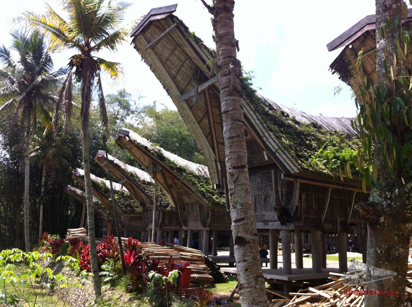 Las vivienda de los Toraja son otro de los motivos para visitar esta zona. Se cuenta que tienen forma de barco porque echaban de menos las costas de Sulawesi de dónde fueron expulsados.