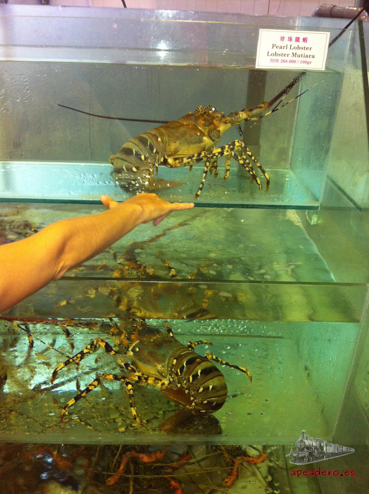 Aunque Kuta no es el mejor lugar para comer marisco (algo más caro que en otras zonas), a cambio se pueden encontrar algunos de los mejores ejemplares o los más grandes al menos.