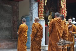 El templo de Doi Suthep fue uno de los lugares dónde vimos mayor número de monjes y fue más fácil fotografiarles.
