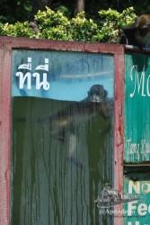 En Songkhla también hay monos. Por la noche nos visitaban en la guest-house, pero esta vez estaba bien aislada.
