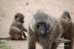 Los monos son animales muy sociales, pero individualistas a la vez.