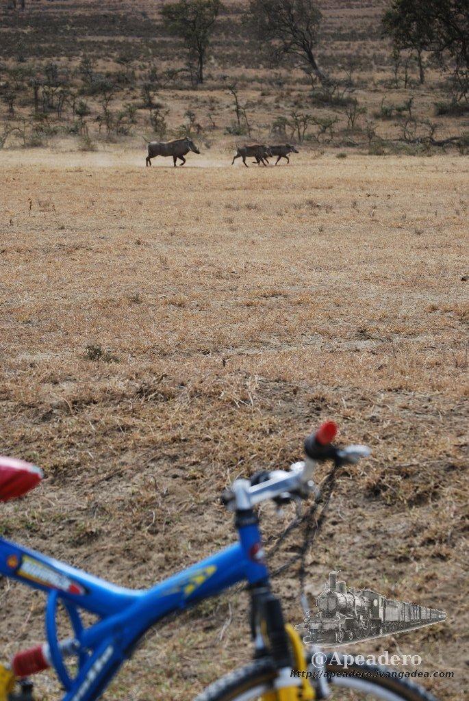 Viajar en bicicleta por el mundo es una forma bonita de viajar
