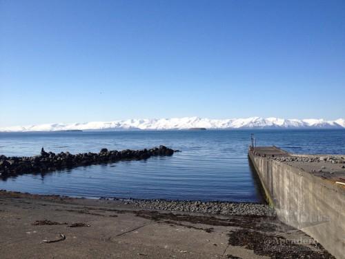 Tjörneshöfn además de los fósiles, también es un bonito lugar dónde sentarse unas horas con la intención de avistar ballenas, ya que sus costas son las que las suelen recibir.