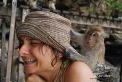 Y sí, a nosotros también se nos subieron los monos encima y trataron de robarnos (aunque no lo consiguieron).