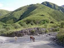 Caballos en libertad bebiendo de un arroyo que cruza la carretera