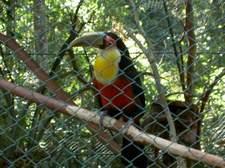 Las aves son la principal atracción en Guira Oga